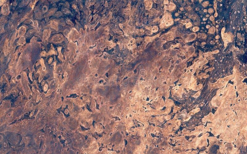 Σπόρια, μύκητας στο φλοιό διανυσματική απεικόνιση