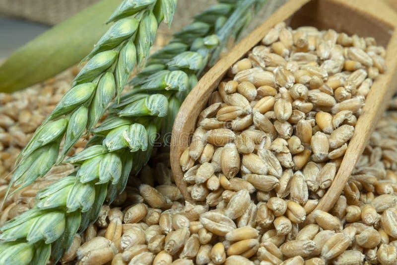 Σπόροι σίτου που ανατρέπουν από την ξύλινη σέσουλα στοκ φωτογραφία