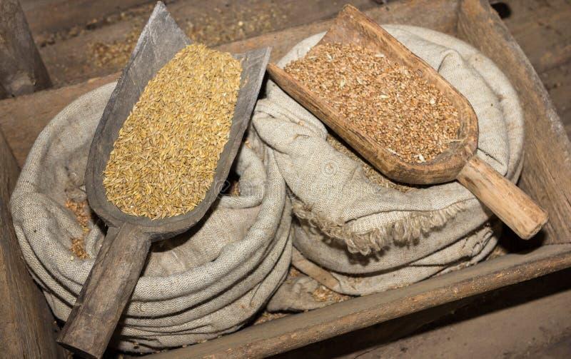 Σπόροι σιταριού κριθαριού και σίκαλης στη σιταποθήκη του αγρότη στους αρχαίους χρόνους στοκ φωτογραφία με δικαίωμα ελεύθερης χρήσης