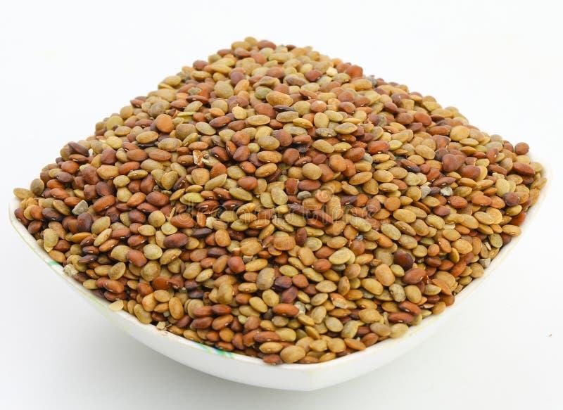 Σπόροι του Karat στοκ εικόνες