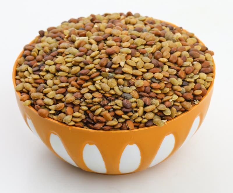 Σπόροι του Karat στοκ εικόνα
