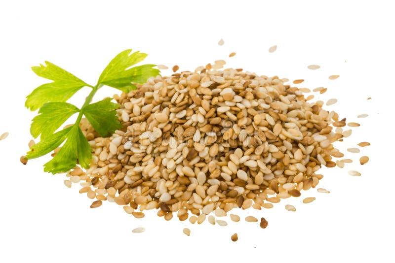 Σπόροι Sesam στοκ εικόνα με δικαίωμα ελεύθερης χρήσης