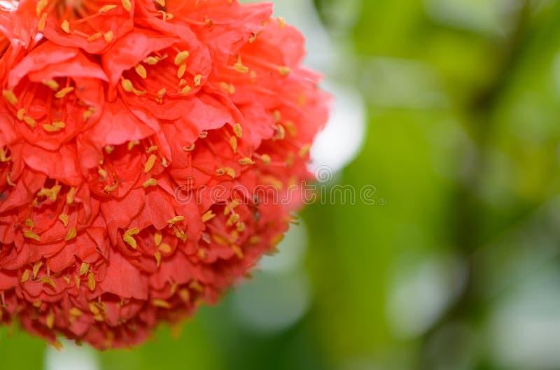 Σρι Λάνκα. Βασιλικοί βοτανικοί κήποι στοκ φωτογραφία με δικαίωμα ελεύθερης χρήσης