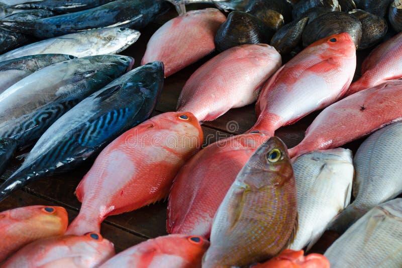 Στάβλος πωλήσεων - οι πέρκες θάλασσας και ο τόνος, κλείνουν επάνω στοκ φωτογραφία