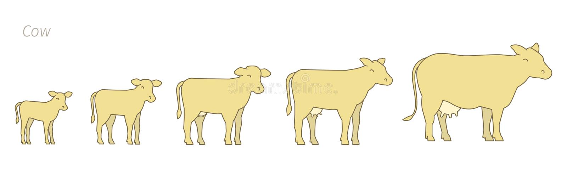 Στάδια του συνόλου αύξησης αγελάδων Αγρόκτημα γάλακτος Αγελάδα αναπαραγωγής Ενισχύει την παραγωγή Αύξηση βοοειδών Ο μόσχος μεγαλώ απεικόνιση αποθεμάτων