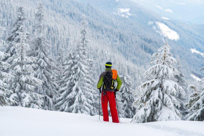 Στάσεις τυχοδιωκτών των τεράστιων δέντρων πεύκων που καλύπτονται μεταξύ με το χιόνι στοκ φωτογραφία με δικαίωμα ελεύθερης χρήσης