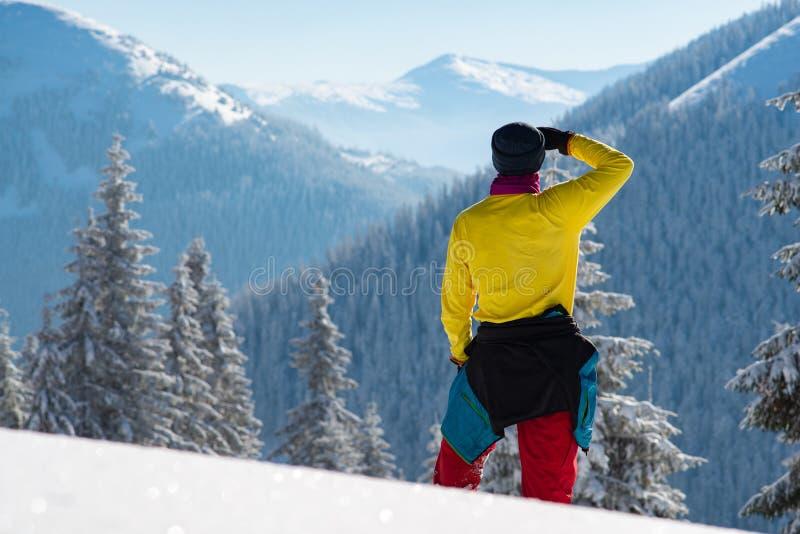 Στάσεις τυχοδιωκτών των τεράστιων δέντρων πεύκων που καλύπτονται μεταξύ με το χιόνι στοκ εικόνες