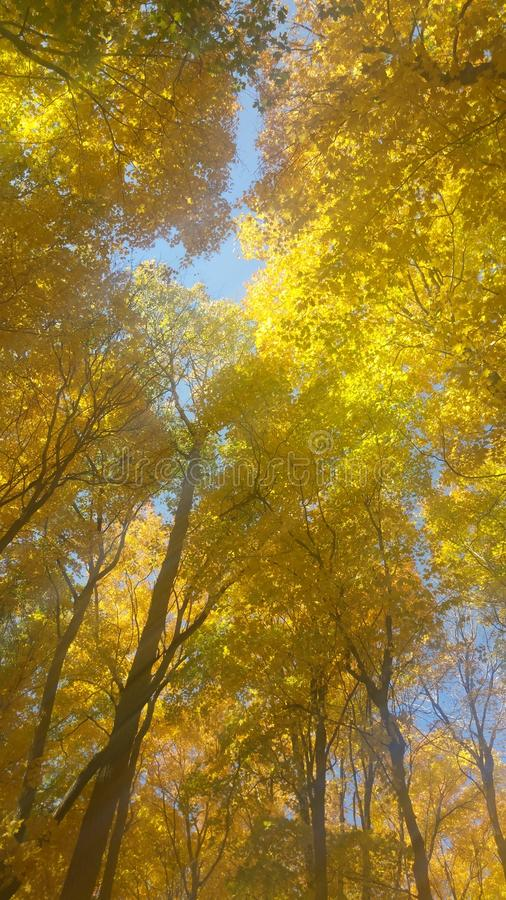 Στέγη φθινοπώρου στοκ φωτογραφία