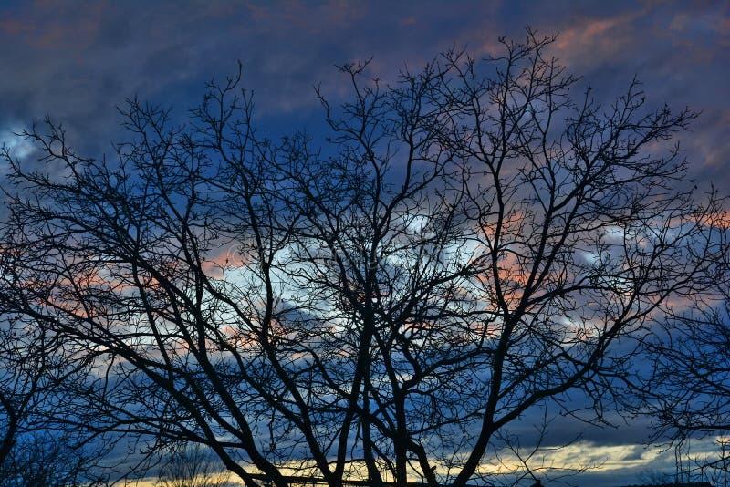Στέμμα με πολλά κλαδάκια στον σκοτεινό γαλάζιο ουρανό στοκ φωτογραφίες