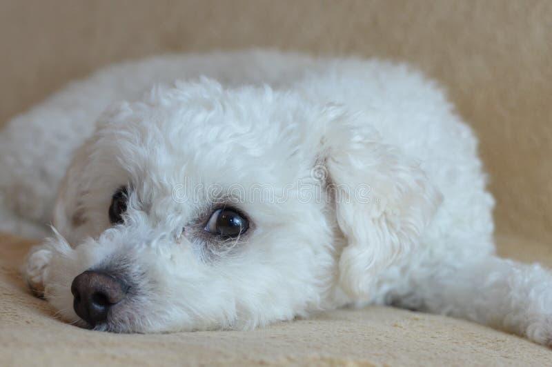 στήριξη σκυλιών στοκ εικόνες με δικαίωμα ελεύθερης χρήσης