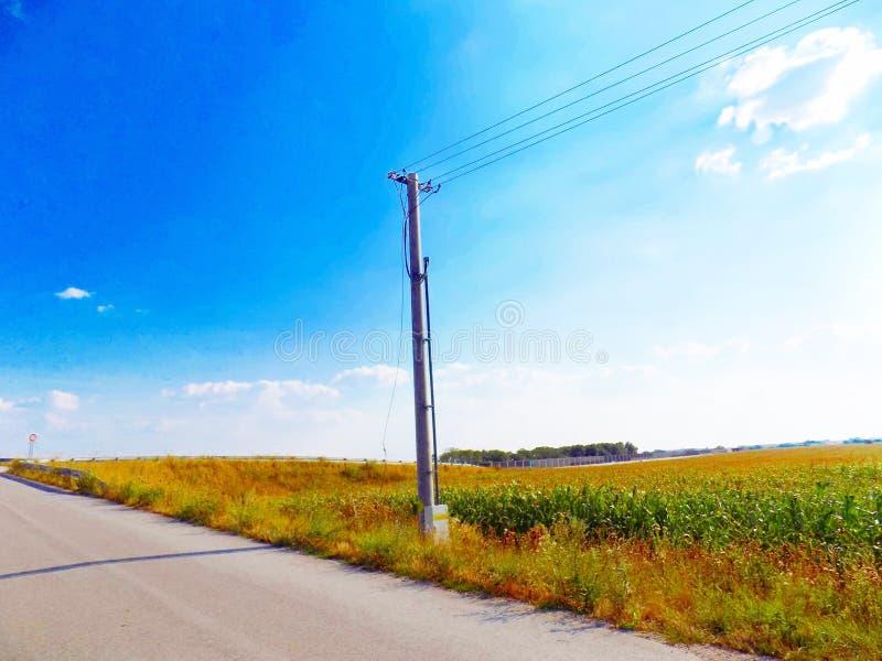 Στήλη ηλεκτροφόρων καλωδίων μεταξύ του δρόμου και του τομέα καλαμποκιού στοκ φωτογραφίες με δικαίωμα ελεύθερης χρήσης