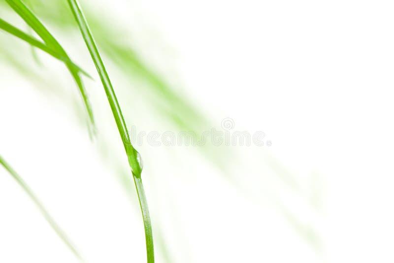 σταγόνα βροχής χλόης λεπίδων στοκ φωτογραφία με δικαίωμα ελεύθερης χρήσης