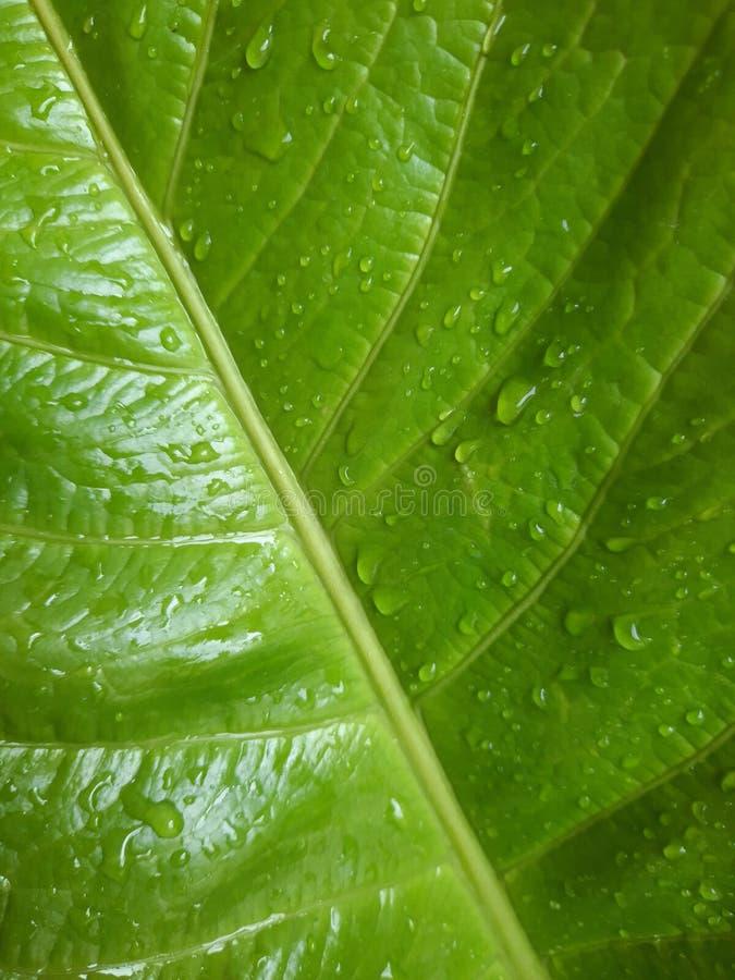Σταγόνα νερού σε πράσινο φύλλο στοκ φωτογραφία με δικαίωμα ελεύθερης χρήσης