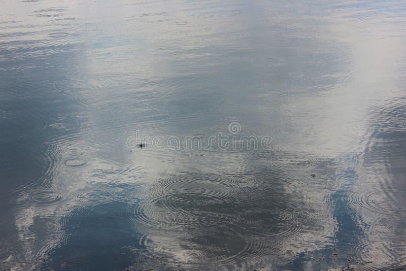 Σταγόνες βροχής σε μια λίμνη στοκ φωτογραφία με δικαίωμα ελεύθερης χρήσης