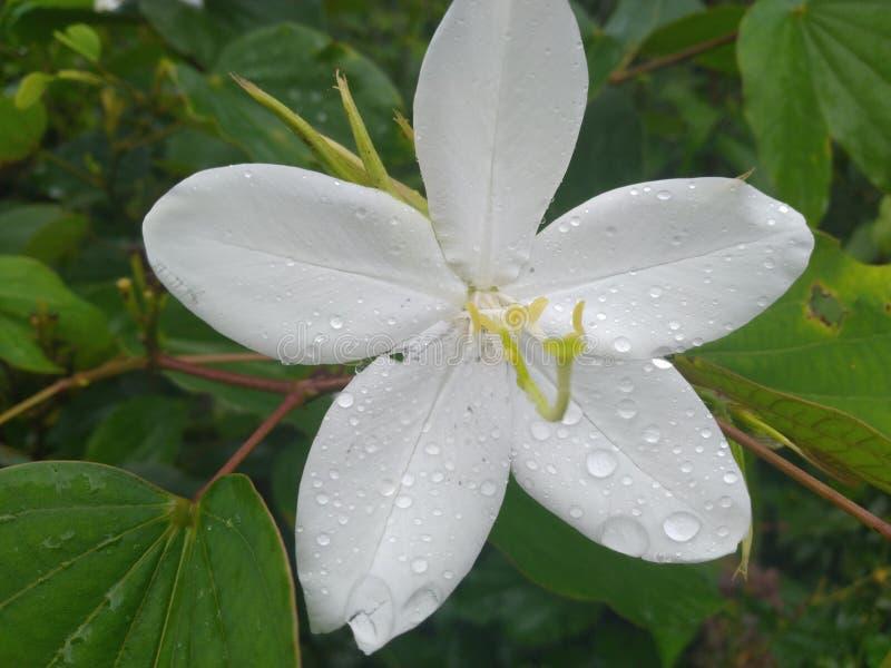 Σταγόνες βροχής στα όμορφα λουλούδια στοκ εικόνες