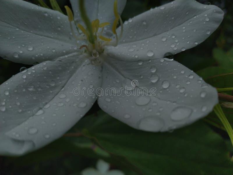 Σταγόνες βροχής στα όμορφα λουλούδια στοκ εικόνες με δικαίωμα ελεύθερης χρήσης