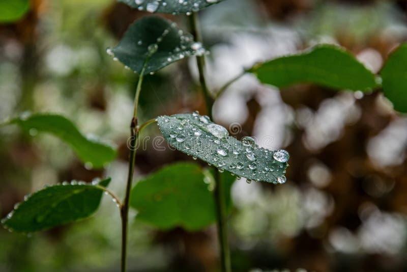 Σταγόνες βροχής στο φύλλο στοκ εικόνες