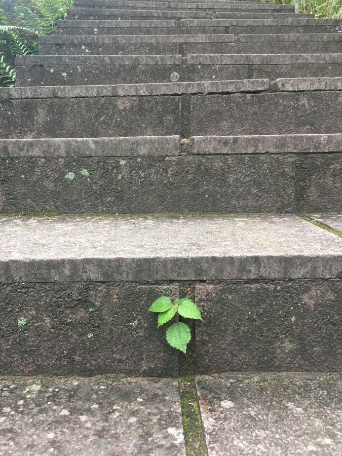 Σταθερά φύλλα στοκ εικόνες