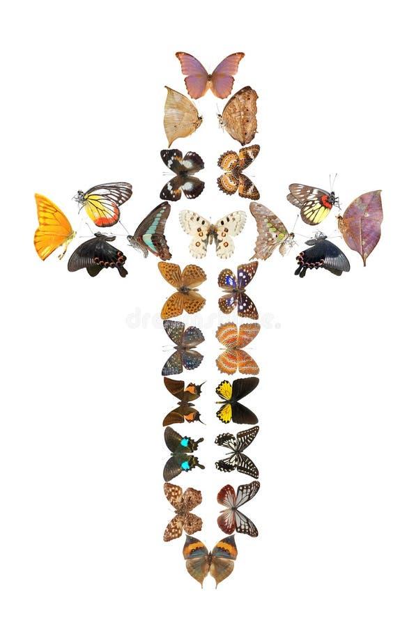 σταυρός πεταλούδων στοκ φωτογραφία με δικαίωμα ελεύθερης χρήσης
