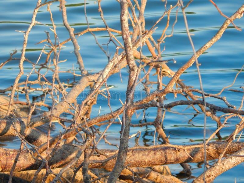 Σταυρώνοντας κλάδοι από τη λίμνη Ντάγκλας σε Dandridge, Τένεσι στοκ φωτογραφία με δικαίωμα ελεύθερης χρήσης