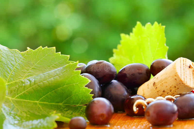 Σταφύλι, φύλλο, φελλός - υπόβαθρο για το κόκκινο κρασί στοκ φωτογραφία με δικαίωμα ελεύθερης χρήσης