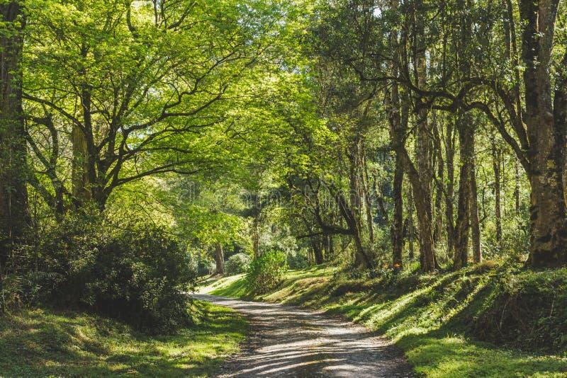 Στα δάση στοκ φωτογραφίες