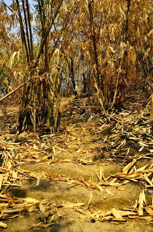 Στεγνά φύλλα μπαμπού που πέφτουν στο δάσος μπαμπού στο Εθνικό Πάρκο Πουτοέι  , Suphan Buri , Ταϊλάνδη στοκ φωτογραφίες με δικαίωμα ελεύθερης χρήσης