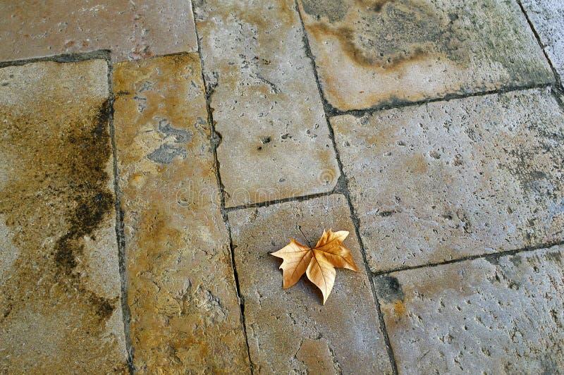 Στεγνό φύλλο σφενδάμνου στο πέτρινο δάπεδο στοκ εικόνες