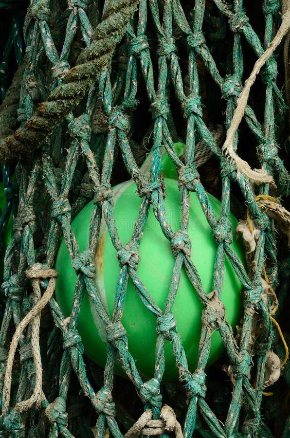 στενά δίχτυα βραγχίων στοκ εικόνα με δικαίωμα ελεύθερης χρήσης