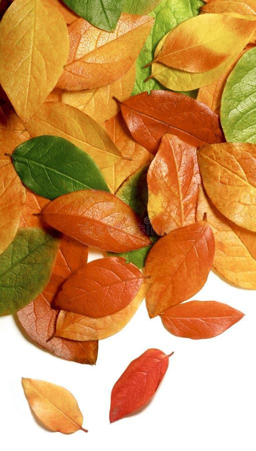 στενά φύλλα φθινοπώρου επ Στοκ Εικόνες