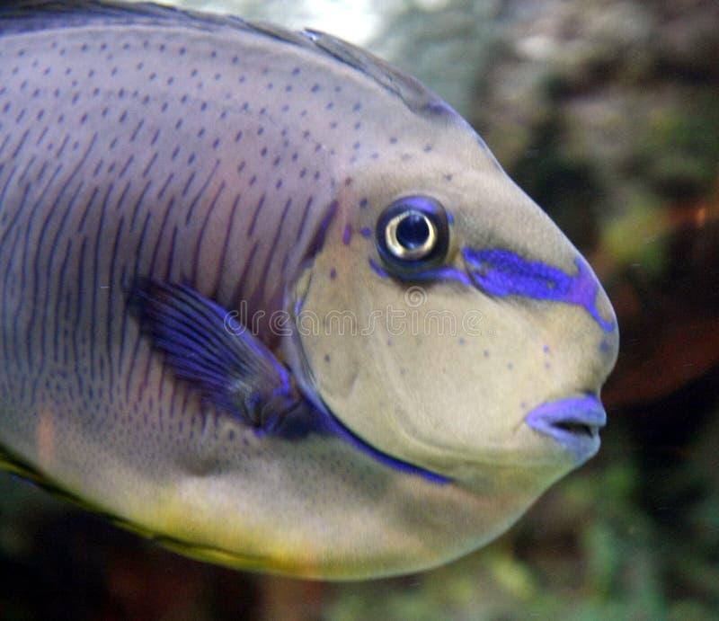 στενά ψάρια επάνω στοκ φωτογραφία