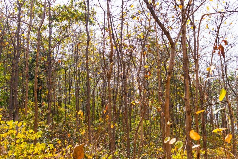 Στενή άποψη του ινδικού φθινοπώρου δασικών δέντρων στο δύσκολο βουνό που φαίνεται τρομερό σε θερινή περίοδο στοκ εικόνες
