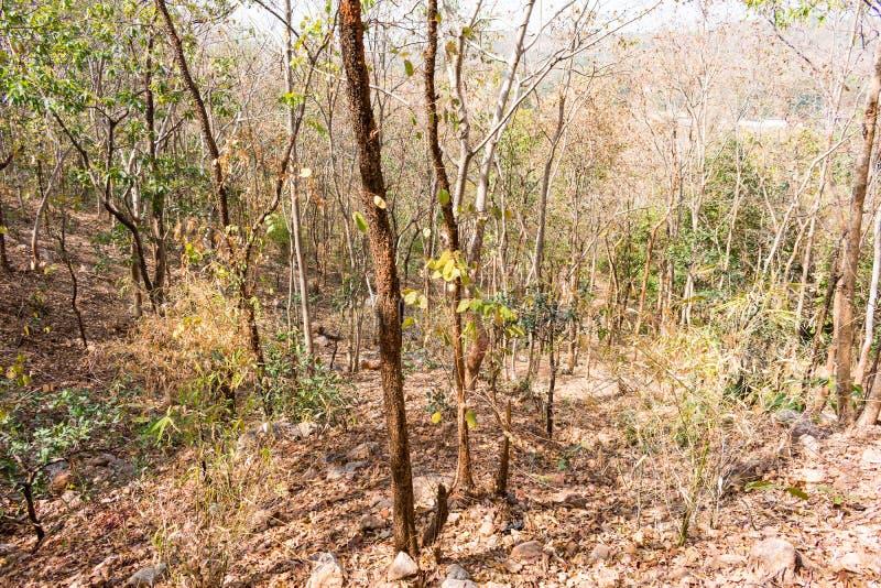 Στενή άποψη του ινδικού φθινοπώρου δασικών δέντρων στο δύσκολο βουνό που φαίνεται τρομερό σε θερινή περίοδο στοκ φωτογραφίες με δικαίωμα ελεύθερης χρήσης