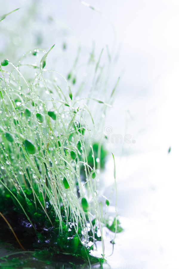 στενή βροχή βρύου επάνω στοκ φωτογραφία με δικαίωμα ελεύθερης χρήσης