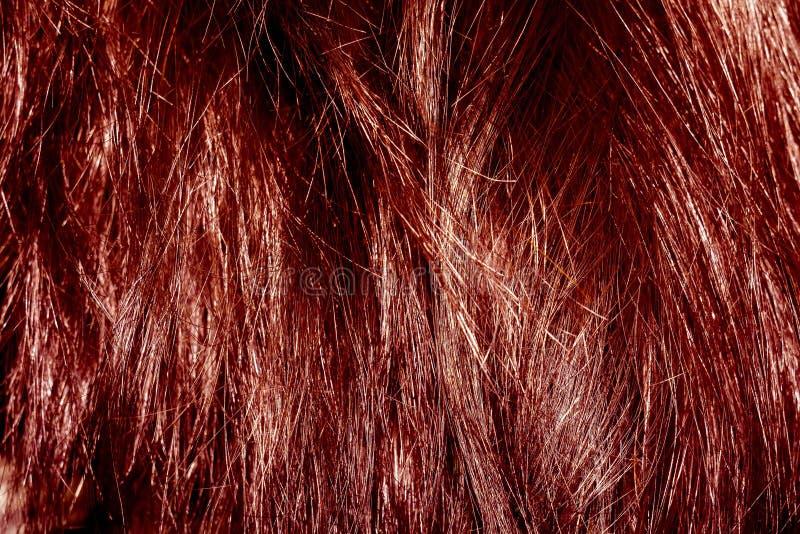 στενή κόκκινη σύσταση εικόνας τριχώματος επάνω στοκ εικόνες