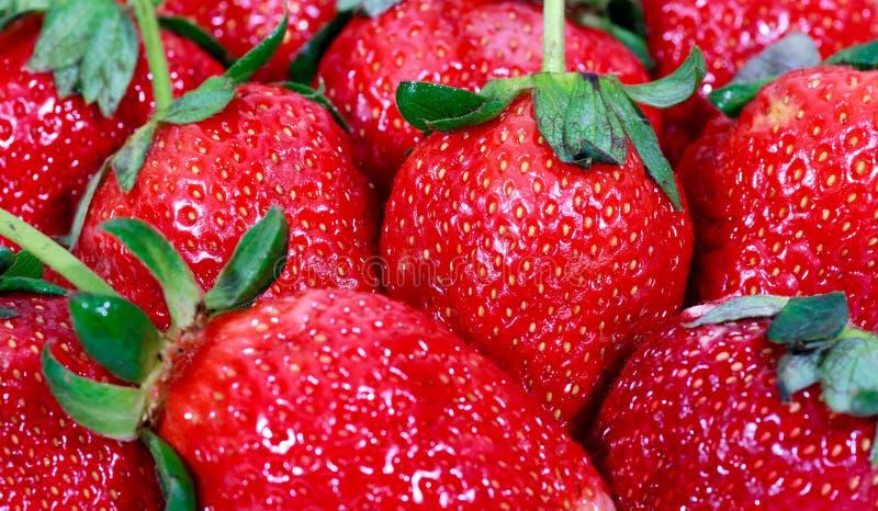 στενή κόκκινη φράουλα επάν&o στοκ εικόνα με δικαίωμα ελεύθερης χρήσης