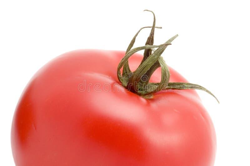στενή μακρο ντομάτα επάνω στοκ φωτογραφίες