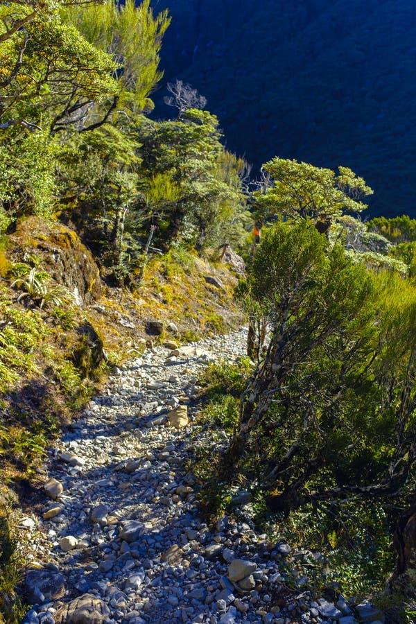 Στενή πορεία πεζοπορώ στο αλπικό δάσος στοκ εικόνες με δικαίωμα ελεύθερης χρήσης