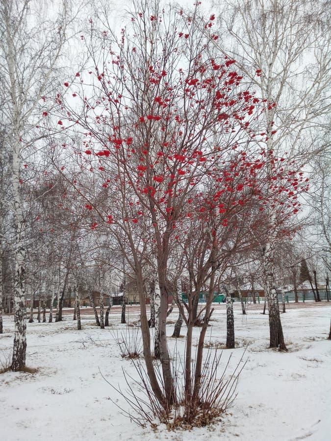 στενή σορβιά επάνω στο χειμώνα στοκ εικόνες με δικαίωμα ελεύθερης χρήσης