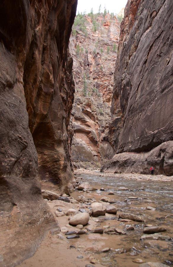 Στενεύει, εθνικό πάρκο Zion, Γιούτα, ΗΠΑ στοκ εικόνες