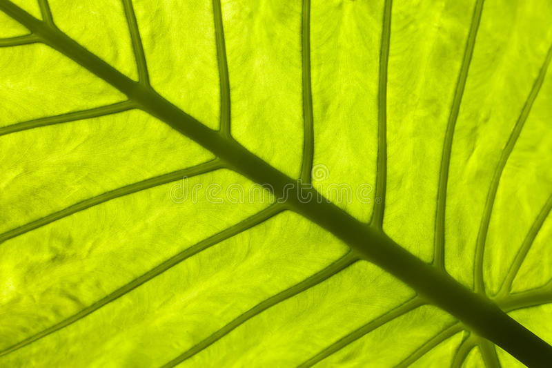 Στενός ένας επάνω ενός τροπικού φύλλου στοκ φωτογραφία