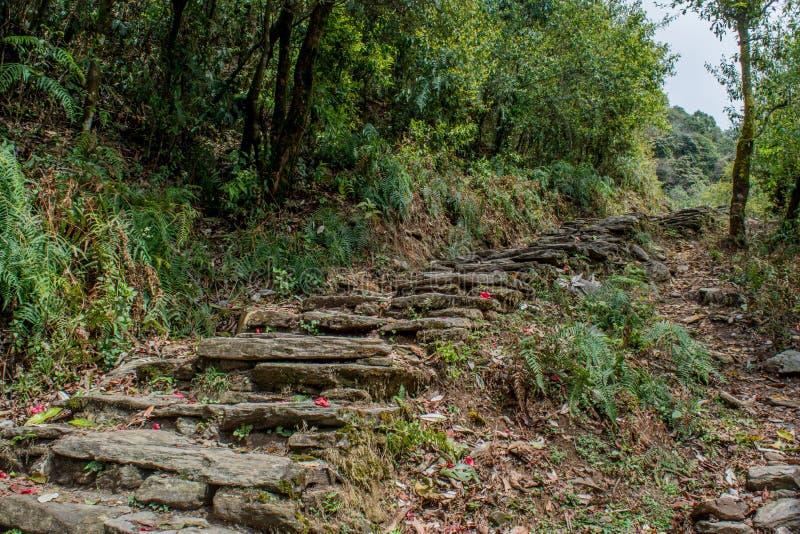 Στενός δρόμος για πεζοπορία κατασκευασμένος από πέτρες στο δάσος στο Mardi Himal trek στοκ φωτογραφίες με δικαίωμα ελεύθερης χρήσης