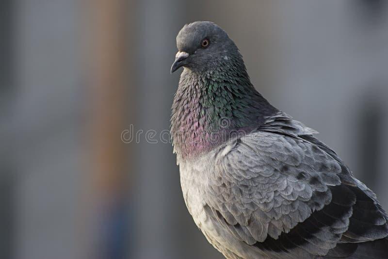 στενός επάνω πουλιών στοκ φωτογραφία με δικαίωμα ελεύθερης χρήσης