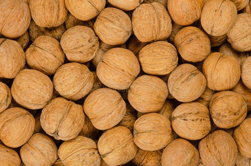 Στενός επάνω υποβάθρου ξύλων καρυδιάς, σωρός των unshelled καρυδιών στοκ εικόνες με δικαίωμα ελεύθερης χρήσης