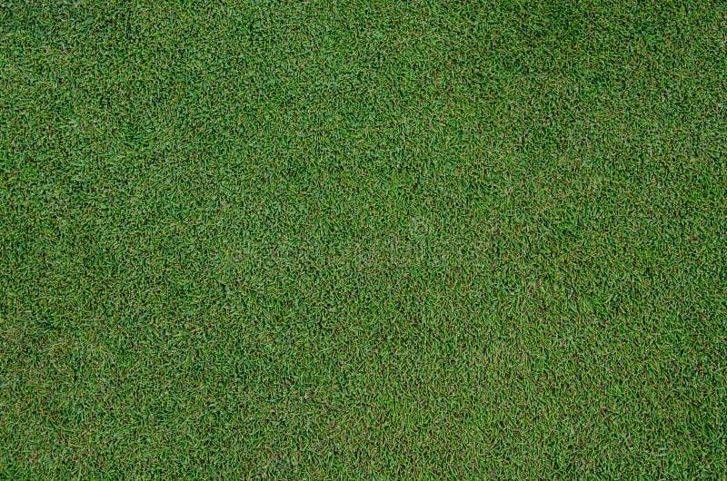 Στενός επάνω χλόης περιθωρίου γκολφ στοκ εικόνες