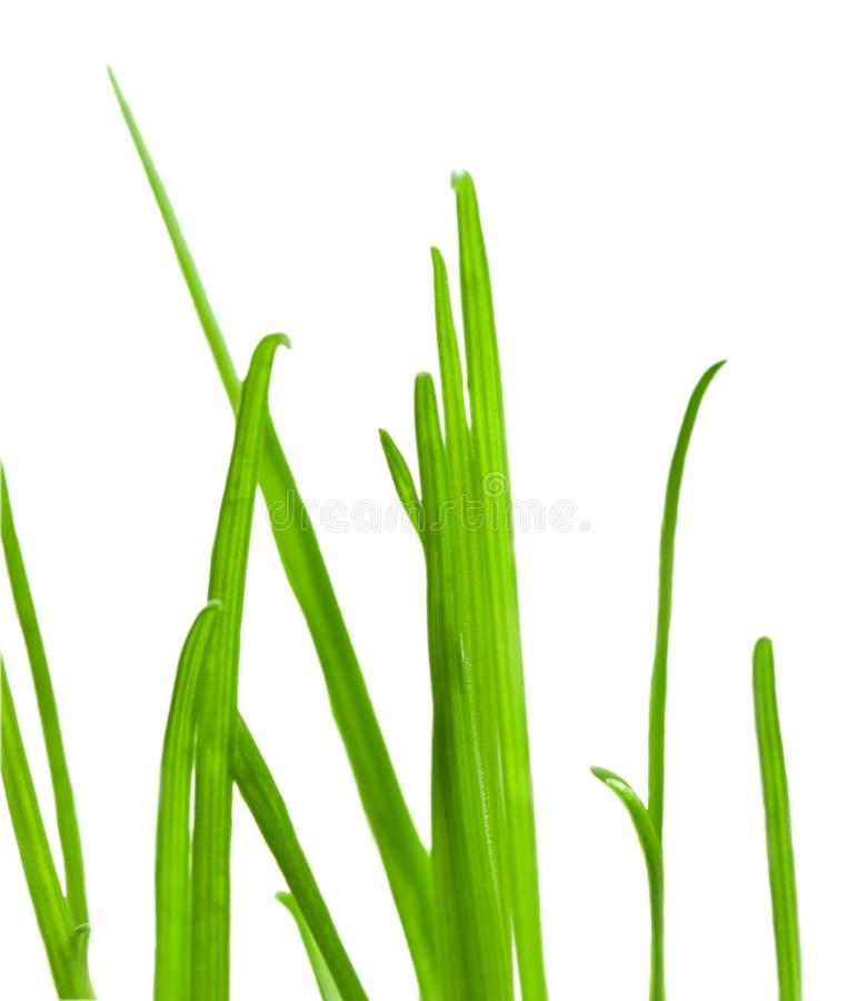 στενός πράσινος επάνω χλόη&sigm στοκ φωτογραφία
