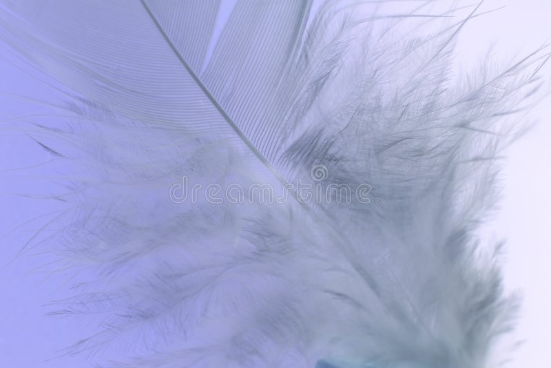 στενό λευκό φτερών στοκ φωτογραφίες