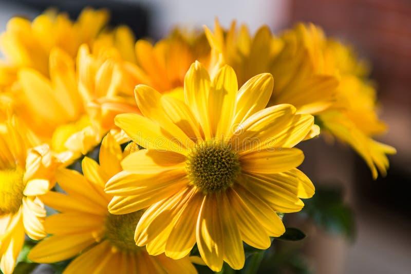 στενό λουλούδι επάνω κίτρ& στοκ φωτογραφίες