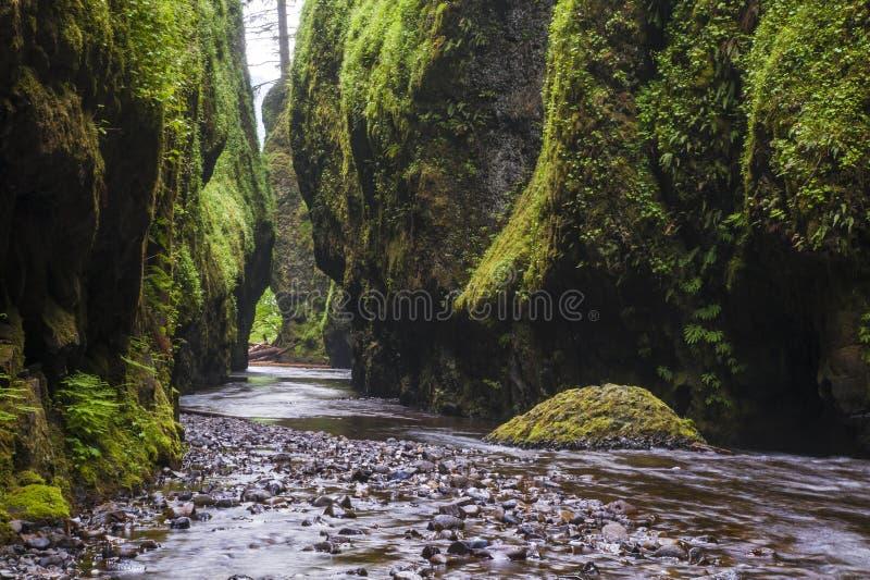 Στενό πράσινο φαράγγι ποταμών στοκ εικόνες με δικαίωμα ελεύθερης χρήσης