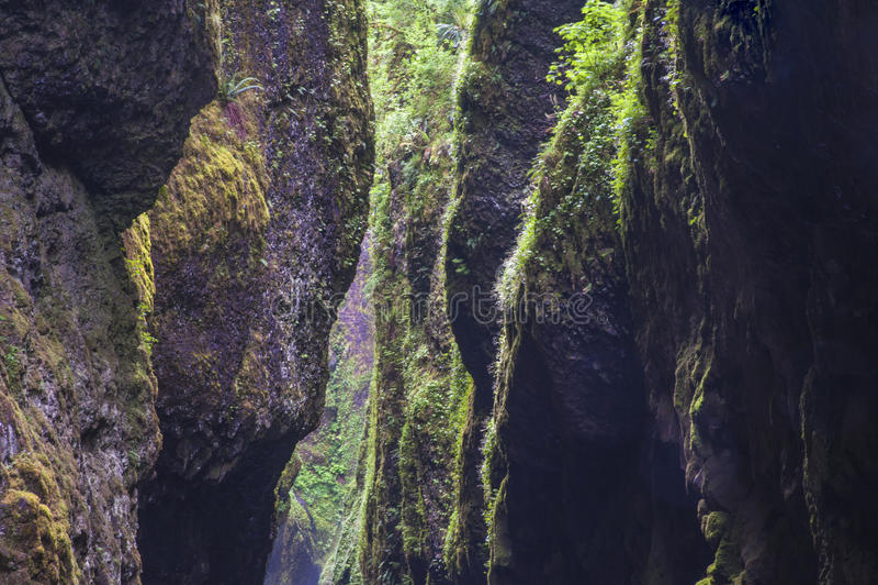 Στενό πράσινο φαράγγι ποταμών στοκ φωτογραφία